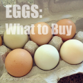 eggs-featured