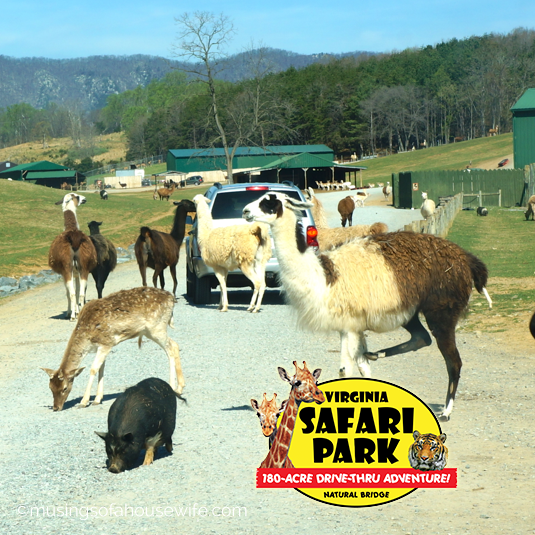 safari-park-featured