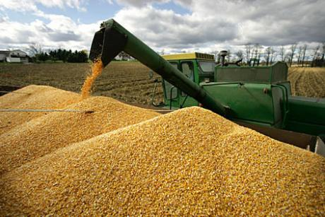 commodity corn
